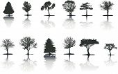Trees (Vector)
