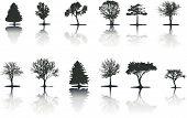 Trees (Vector)