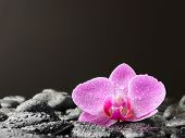 Pink orchid on the black zen stones