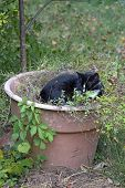 A Beautiful And Intoxicated Black And White Cat Chills Out In A Large Pot Of Catnip poster