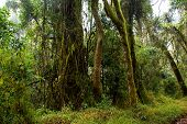 picture of epiphyte  - Tropical forest - JPG