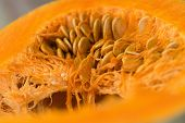 Fresh Pumpkin Food Closeup. Healthy Food. Vegetarian Food. Nutritious Food. Pumpkin Close Up. Food.  poster