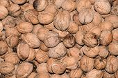 Walnut And Walnut Kernel. Top View Of Walnuts In Nutshells In Full Screen poster