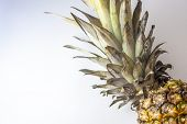 Single Pineapple, Ananas Isolated On White Background, Negative, Copyspace. Top View, Flat Lay. poster