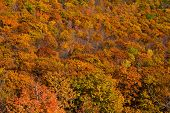 Brilliant Autumn Landscape In New England