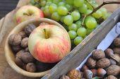 Fruit Harvest Season