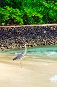 Grey Heron At The Beach