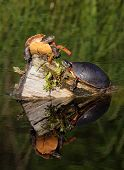two painted turtles basking in the sun