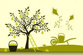 pic of hand-barrow  - vector pear tree - JPG