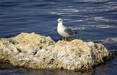 Seagull On A Rock Against The Blue Sea