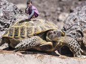 Traveler Girl And Tortoise