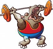 Strong hippo lifting weights