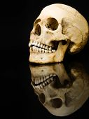 foto of jaw-bone  - Human skull facing to the left with mirror image isolated on a black background - JPG