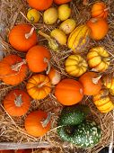 stock photo of hayride  - This is a diverse assortmrnt of little pumpkins and gourds - JPG