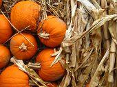 a collage of mini pumpkins and corn stalk