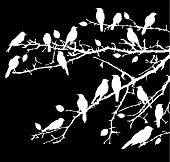Branches Birds