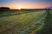 Sunrise Over Green Haymaking