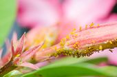 picture of aphid  - Aphids on the flower in the nature or in the garden - JPG