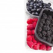 Border of Ripe BlackBerries  in plastic container box, isolated over a white background