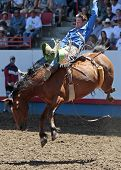 Prca Cowboy Royce - Rodeo Action