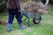 Cleaning Up  Garden Using Wheelbarrow
