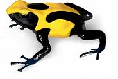Dyeing Poison-dart Frog - Vector Illustration