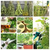 Collage of fresh herbs on balcony garden