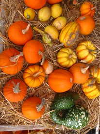 picture of hayride  - This is a diverse assortmrnt of little pumpkins and gourds - JPG