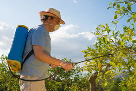 pic of pesticide  - Agricultural worker in a citrus plantation spraying pesticide - JPG