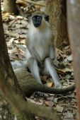 Relaxation primate style