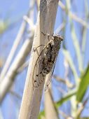 Cicada on a tree - Summer in the south of France