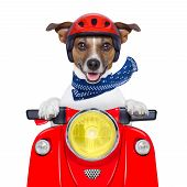 Motorcycle Dog