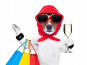 Shopaholic Diva Dog