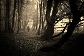 image of creepy  - Man walking in a dark creepy eerie forest with fog and strange dark trees