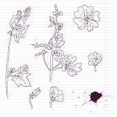 ink drawing  mallow flowers