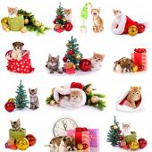 Collage of kittens and puppy with Christmas decorations isolated on white