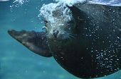 stock photo of sea lion  - Sea  - JPG