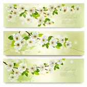 Three spring banners with blossoming tree brunch with spring flowers. Vector illustration.