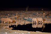 Rhinos at waterhole