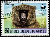 GUINEA - CIRCA 2000: A stamp printed in Guinea shows Papio papio, series, circa 2000