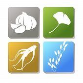 stock photo of ginseng  - Icon used as a herbal such as garlic ginseng rice and ginkgo leaves - JPG