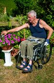foto of circumcision  - Retired person in a wheelchair doing gardening - JPG