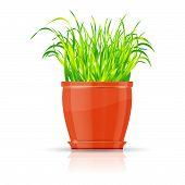 Orange flowerpot with green grass