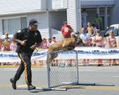 Police Dog Jumping A Hurdle