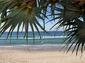 Pandanus tree with beach background