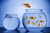 foto of school fish  - Fish happily jumping to a school of fishin a bigger bowl - JPG