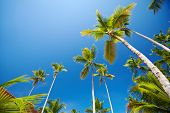 Tropical palms over blue sky background. Vacation concept.
