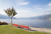 Benches And Tree On The Swiss Lake