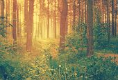 misty forest at sunset, retro filtered, instagram style