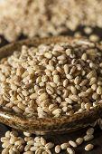 Raw Organic Barley Grain